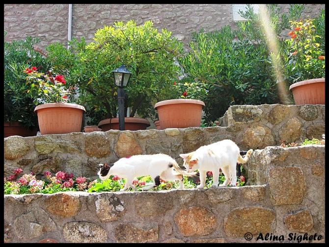 Cats of Meteora