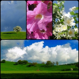 Clouds and Flowers